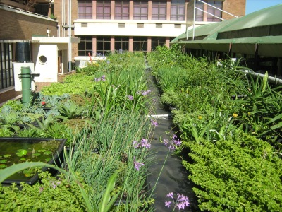 Green Roofs taking cues from nature